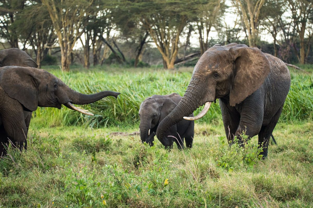 We can't let African wildlife centers fail – here's why