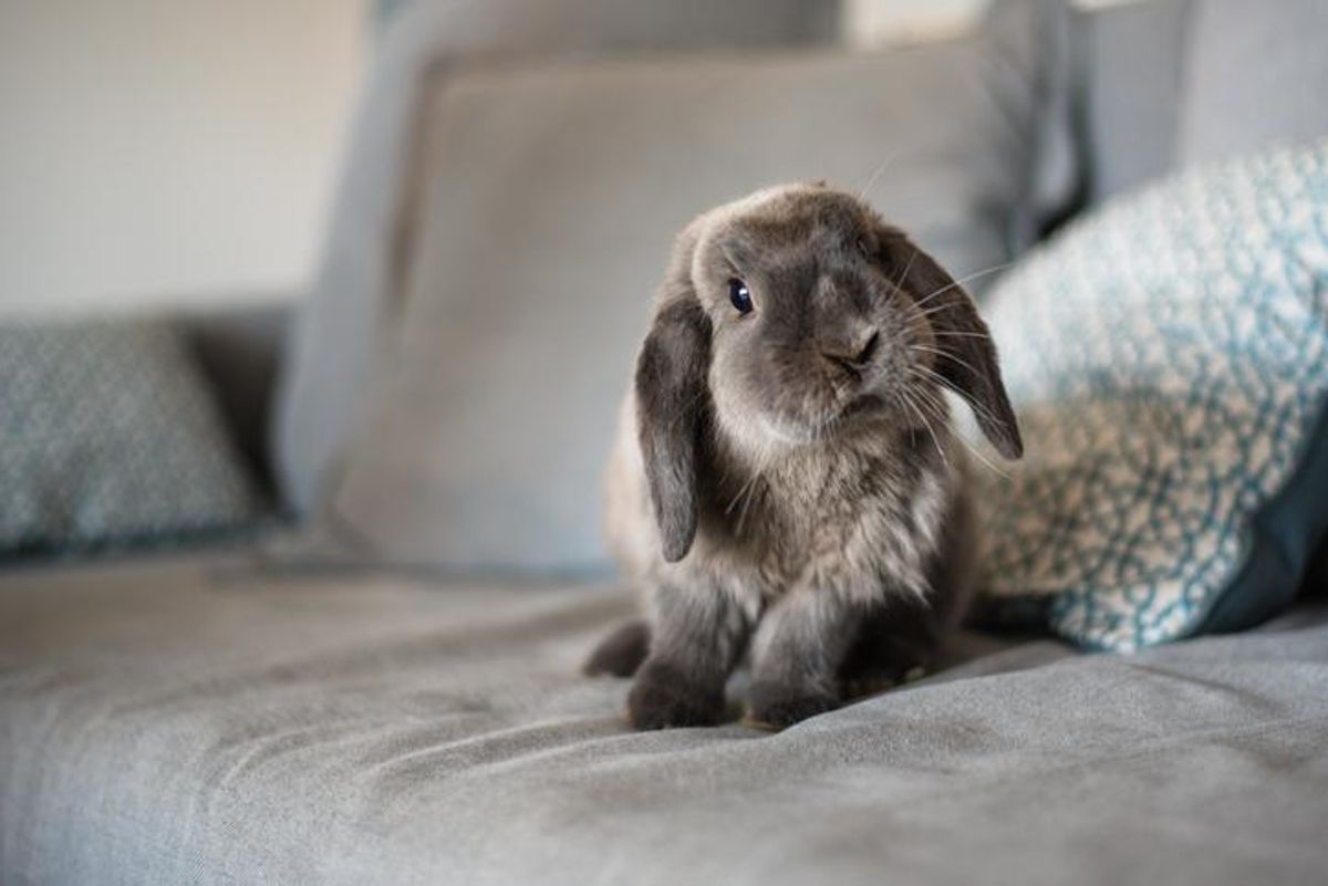 How the Sigmund Freud rabbit photo shows what therapy is about